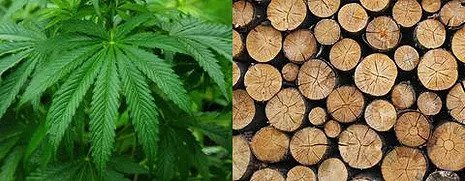 Hemp vs. Trees